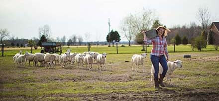 A Kentucky sheep farmer caring for her lambs