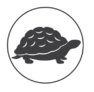 A representation of a turtle