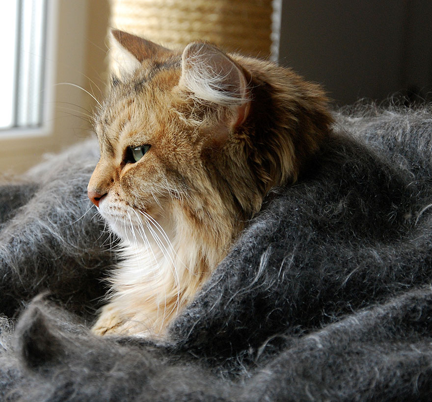 How To Care For Your Senior Or Geriatric Cat Mud Bay