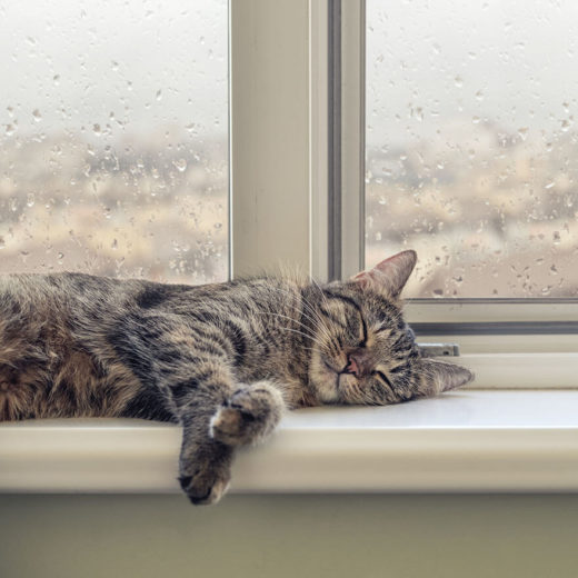 cat sleeping in windowsill