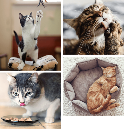 montage of cats playing, eating, grooming and sleeping