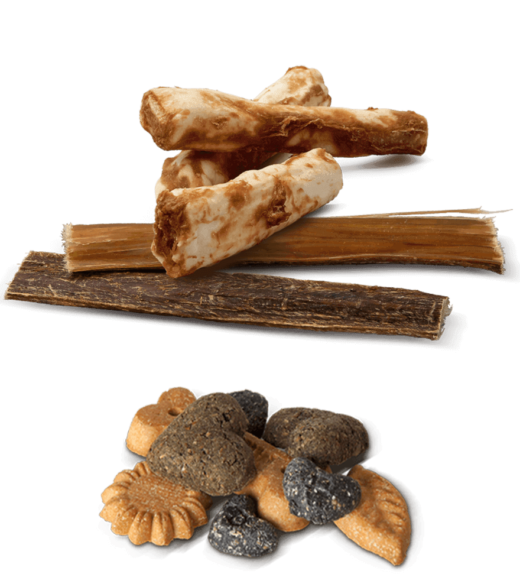 A selection of dog chew treats and dog biscuit treats