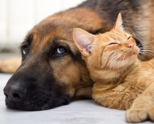 Cat lying against dog