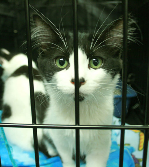 black and white cat in crate