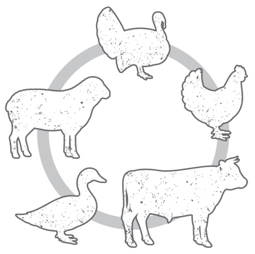 Outlines of Turkey, Chicken, Cow, Duck & Sheep