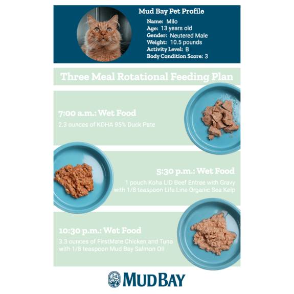 Three Meal Rotational Feeding Plan for Cats