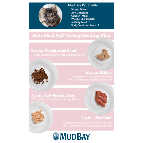 Four Meal Full Variety Feeding Plan for Cats