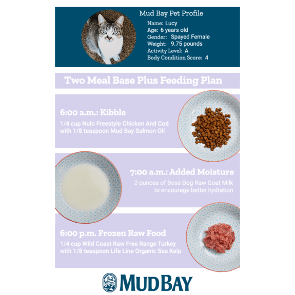 Two Meal Base Plus Feeding Plan for Cats