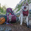 Husky and Backpacking Gear