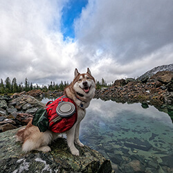 Dog Near Water with Bowl