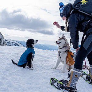 Dogs in Snow Getting Treats